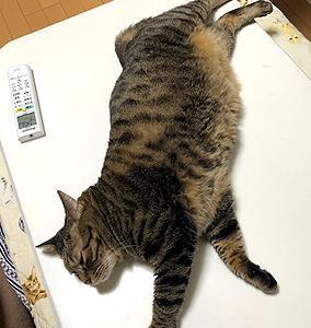 猫まみれな日々「パッカン」