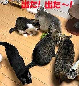猫まみれな日々「草きた!」