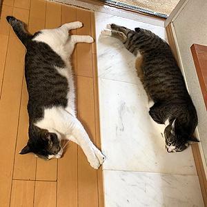 猫まみれな日々「涼しい?」