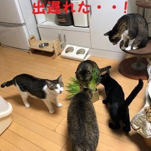 猫まみれな日々「猫草」