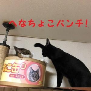 猫まみれな日々「猫パンチ」