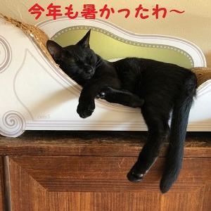 猫まみれな日々「避暑地」