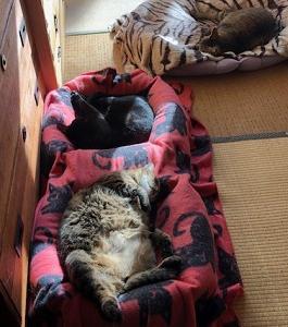 猫まみれな日々「寝相」