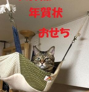 猫まみれな日々「師走準備」