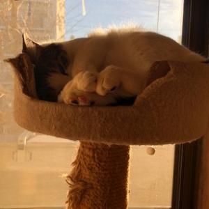 猫まみれな日々「ほかほか」