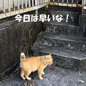 猫まみれな日々「ちゅーるうまし」