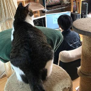 猫まみれな日々「パソコン設定」