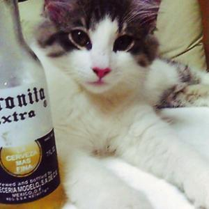猫まみれな日々「ビールと猫」