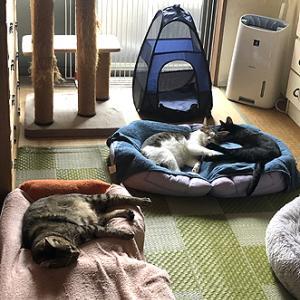 猫まみれな日々「仲良し」