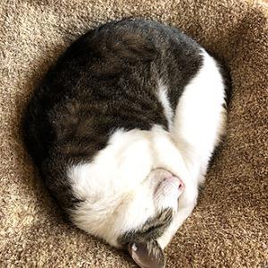 猫まみれな日々「陰陽マーク」