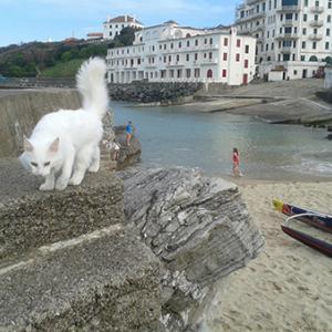 渡欧した猫たちその後、GIG=JAPONYの場合