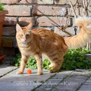渡欧した猫たちその後、REMOの場合