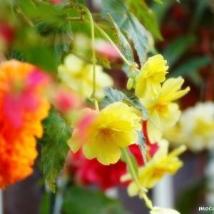 お花とマガオーと