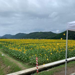 ひまわり畑に行ってきました。