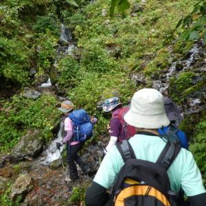 水が流れる登山道 夜叉ケ池山 (1,209M)  登頂編 NO 1