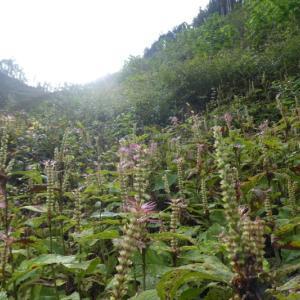 色付いた木々を求めて  舟伏山 (1,040.3M)   登頂 編