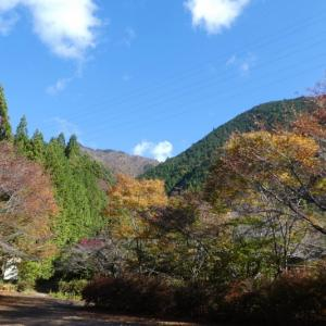 色付き始めた木々 高賀山 (1,224.2M)  ピックアップ編
