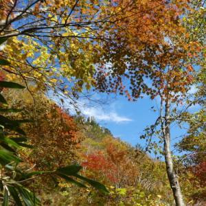 久しぶりに登った 日永岳 (1,215.8M)   登頂編 NO 2