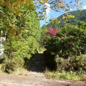 紅葉は少し早かった 高賀山 (1,224.2M)    登頂 編
