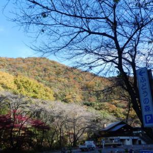 色付いた山々 明王山 (380M)    ピックアップ編