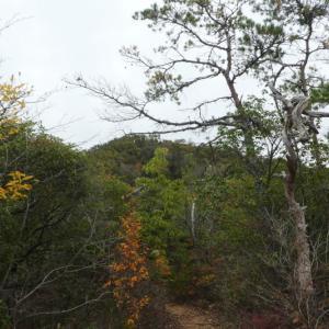 紅葉真っ盛り 継鹿尾山付近周回 NO 2