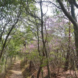 金比羅山 (383M) から鵜沼の森を目指す
