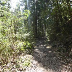 赤ヤシオ満開 納古山 (632.9M)    登頂 編
