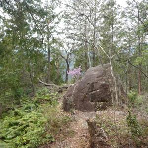 タムシバ咲く 七つ岩 (418M)     下山 編