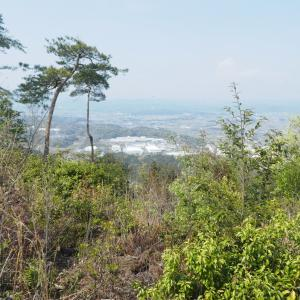 花の明王山 (380M)   下山する