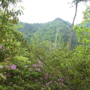 花の芥見権現山 (316.5M) 登頂 編  part 1