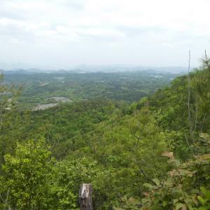 花の芥見権現山 (316.5M)     登頂 編 part 2