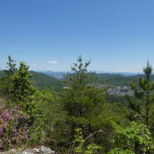花の八木山 (296M)    山頂 編  part 3