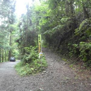 コアジサイ咲く 納古山 (632.9M)    登頂 編   part 1