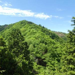 新緑が美しい 小津権現山 (1,157.8M)    下山 編 part 3