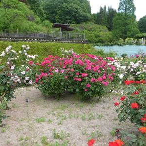 花フエスタ記念公園 散策 part 6