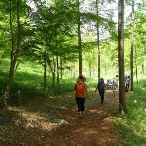 見ごろを迎えたササユリ みたけの森散策 part 2