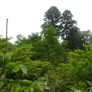 新緑が美しい 鳴谷山 (1,596.5M)   登頂 編  part 3