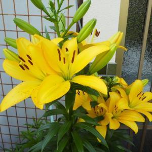 我が家の花 part 4