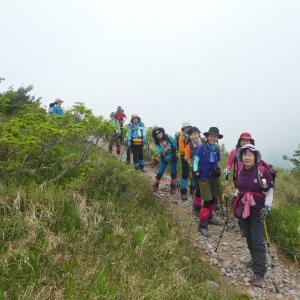 新緑が美しい 鳴谷山 (1,596.5M)    下山 編