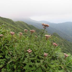 日本二百名山 大日ケ岳 (1,709.0M)   登頂 編 prat 3