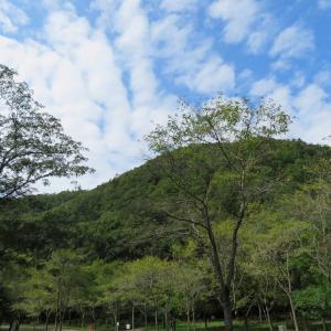 快晴の 八木山 (296M)  登頂 編