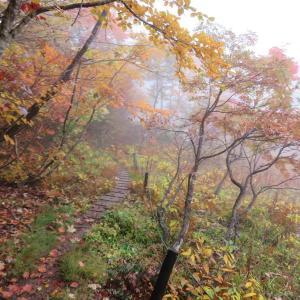 紅葉真っ盛り 籾糠山 (1,744.2M)    ピックアップ編