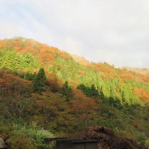 紅葉真っ盛り 金剛銅山 (1,637.8M)  登頂 編