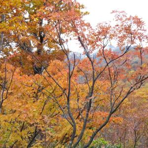 紅葉真っ盛り 金剛銅山 (1,637.8M)   登頂 編 PART2