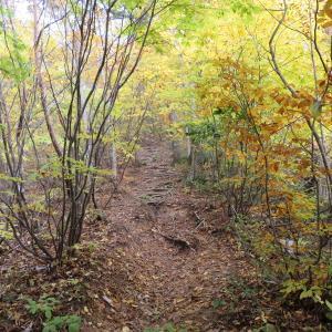 紅葉真っ盛り  蕪山 (1,068.9M)    登頂 編  part 2