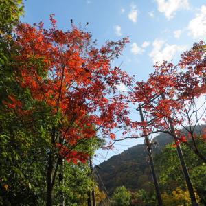 京都トレール散策 小倉山 (296M)     下山 編
