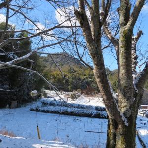雪の芥見権現山 (316.5M)     登頂 編