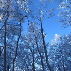 樹氷が素晴らしい 綿向山 (1,110M)   ピックアップ編
