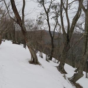 粉雪まう 池田山 (923.7M)  登頂 編  part 2