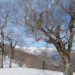 快晴の雪山 猿ケ馬場山 (1,875M)    山頂 編